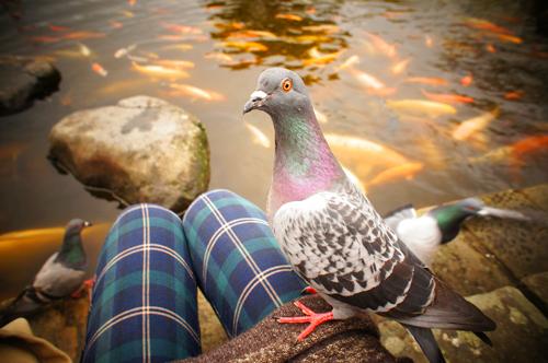 グラバー園で鳩に襲撃される