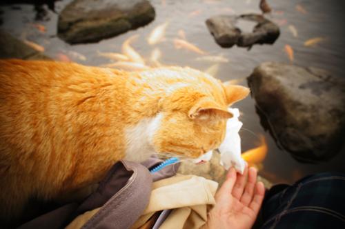 猫ってなんでも食べるんですね。