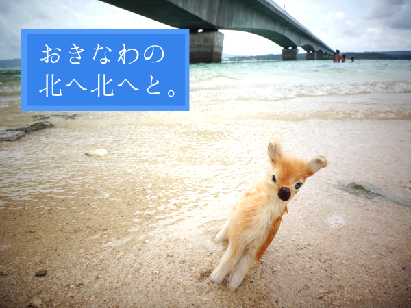 沖縄の北へ北へと